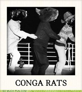 CONGA RATS