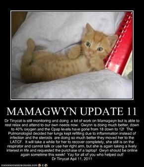 MAMAGWYN UPDATE 11