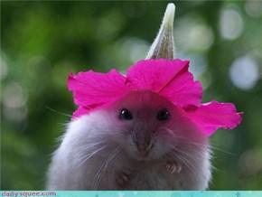 Hamster's Hat