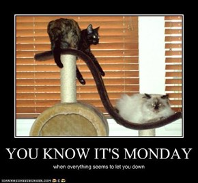 YOU KNOW IT'S MONDAY
