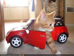 Cyoot Kitteh of teh Day: Ai Drives Mah Mini-Cooper 'n Iz Feelin Supah-Dupah