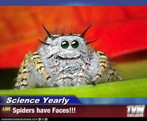 Science Yearly - Spiders have Faces!!!