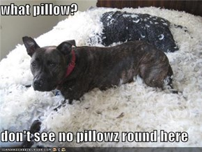 what pillow?