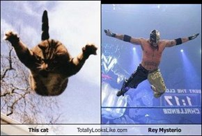 This Cat Totally Looks Like Rey Mysterio