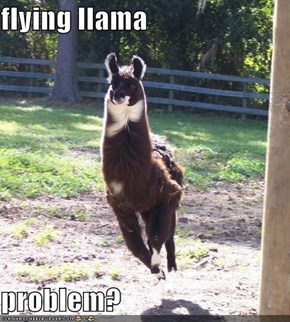 flying llama  problem?