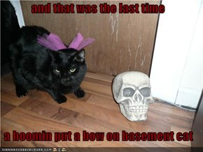 and that was the last time   a hoomin put a bow on basement cat