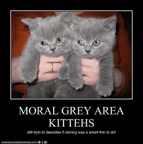 MORAL GREY AREA KITTEHS