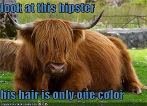 look at this hipster  his hair is only one color