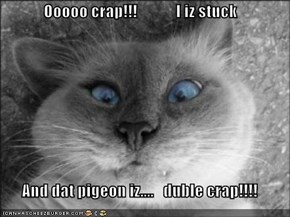 Ooooo crap!!!            I iz stuck  And dat pigeon iz....   duble crap!!!!