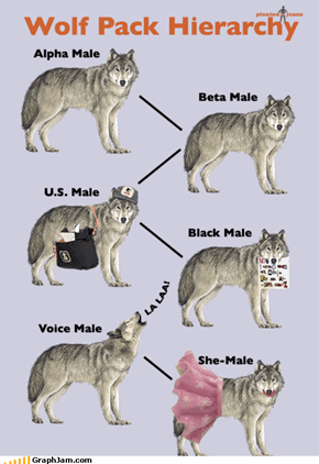 I Tend to Think of Myself as a One Man Wolf Pack