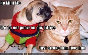 No Mini Me We do not gnaw on our kitties Just stroke him, love him