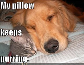 My pillow keeps purring.
