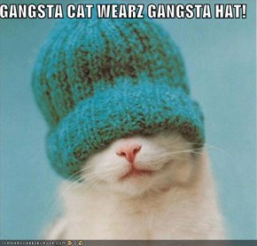 GANGSTA CAT WEARZ GANGSTA HAT!