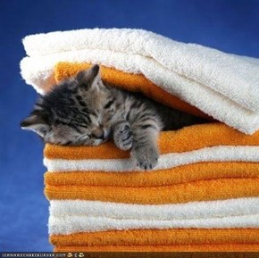 Cyoot Kitteh of teh Day: Maid Kitteh Is Asleep on teh Job
