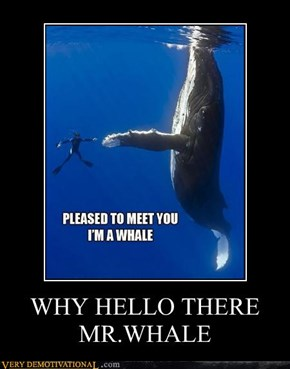 WHY HELLO THERE MR.WHALE