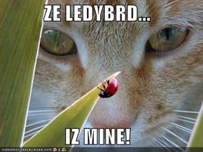 ZE LEDYBRD...  IZ MINE!