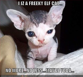 I IZ A FREEKY ELF CAT...  NO MORE...NO LESS...MAYBE YODA...
