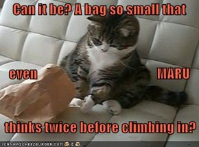 Can it be? A bag so small that    even                                            MARU     thinks twice before climbing in?