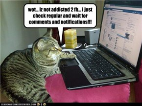 poor kitteh became addicted after hacking into his owners account...