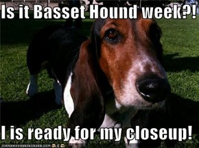 Is it Basset Hound week?!  I is ready for my closeup!