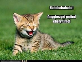 Hahahahahaha!  Goggies get gotted ebery time!