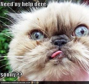 Need'ny help dere,  sonny??