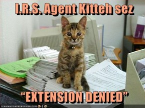 "I.R.S. Agent Kitteh sez      ""EXTENSION DENIED"""