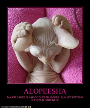 ALOPEESHA