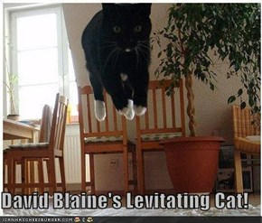 David Blaine's Levitating Cat!