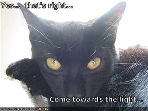 Yes...  that's right...  Come towards the light...
