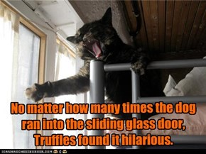 No matter how many times the dog ran into the sliding glass door, Truffles found it hilarious.