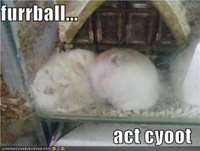 furrball...  act cyoot
