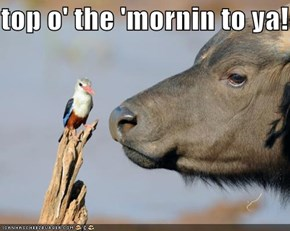 top o' the 'mornin to ya!