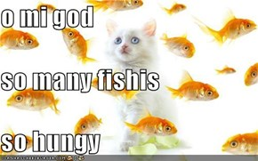 o mi god so many fishis so hungy