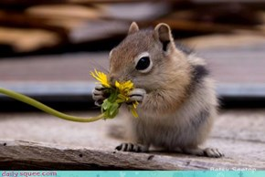 Acting Like Animals: Wake Up and Smell the Flowers