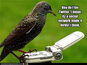 Boy do I luv Twitter. I mean, itz a social network made 4 birds! i think.