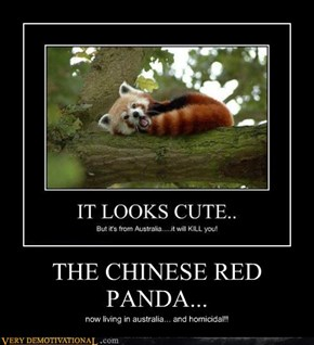 THE CHINESE RED PANDA...