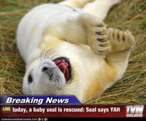 Breaking News - today, a baby seal is rescued: Seal says YAH