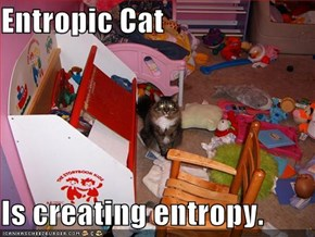 Entropic Cat  Is creating entropy.