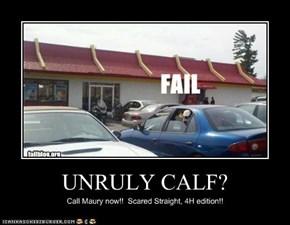 UNRULY CALF?