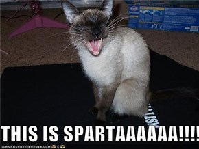 THIS IS SPARTAAAAAA!!!!!