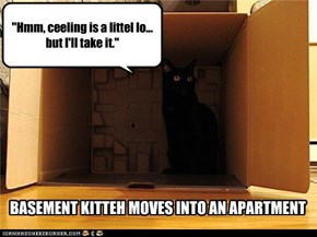 BASEMENT KITTEH MOVES INTO AN APARTMENT