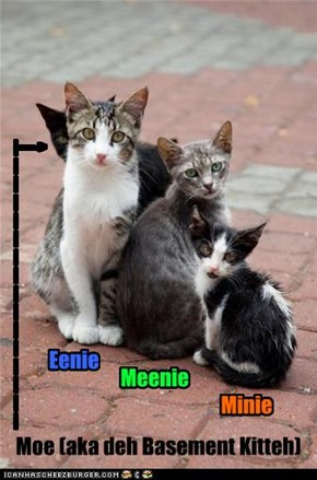 Rayre famly pichure of Basement Kitteh--him wid hiz brudders.