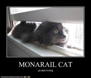 MONARAIL CAT