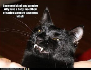 basement kitteh and vampire kitty have a baby. meet their offspring: vampire-basement kitteh!