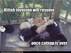 Kitteh invasion will resume