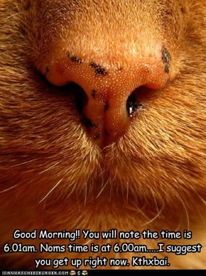 Good Morning!! You will note the time is 6.01am. Noms time is at 6.00am.....I suggest you get up right now. Kthxbai.