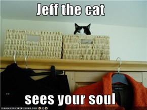 Jeff the cat   sees your soul
