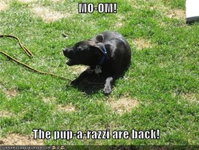MO-OM!  The pup-a-razzi are back!