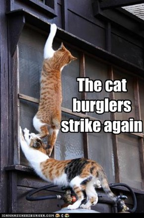 The cat burglers strike again